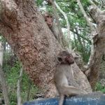 Bored monkeys